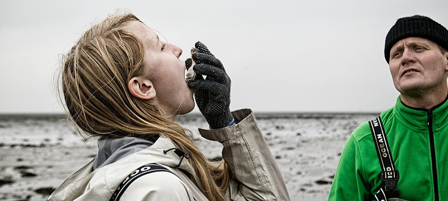 Oysters in the Wadden Sea